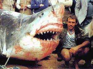 Любой купальщик на морском побережье США может стать жертвой акулы.